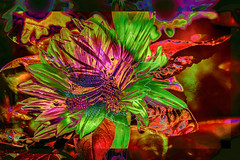 Girasoles (seguicollar) Tags: girasoles imagencreativa photomanipulación art arte artecreativo artedigital virginiaseguí texturas color colorido green red
