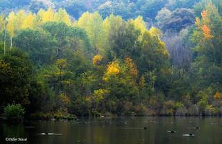 L'automne à l'étang de Lavilletertre