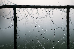 Happy Web Wednesday! (jciv) Tags: fog web file:name=dsc07874 macro wet dew spiderweb fence
