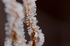 Stairway to Heaven (Яна Андреева) Tags: frozen ice macro macrophotography closeup closeupphotography frozenplant plant icyplant winter cold icecold