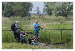 oostvaardersplassen-ncn-117 (voorhammr) Tags: 2017 ganzen groep hert ncn oostvaardersplassen zwaan zwaluwen