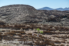 Tourist photographing tree in the Namibia Desert, Africa. (Remsberg Photos) Tags: africa namibia world travel tourist desert rocky landscape tree growth photographing mountains terrain solitaire nam