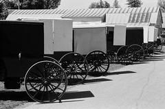 Buggies at the Market (miked2019) Tags: amish ilford pennsylvania buggy rural