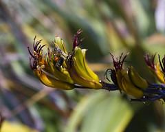 2017-06-18 Virginia Water Savill Gardens IMG_9176 (Darkstar Moody) Tags: bee bees sun savillgardens virginiawater windsorgreatpark flowers flora fauna