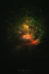 Un camino en la oscuridad (Mimadeo) Tags: path forest scary dark sullen hope lost fear horror mood moody landscape magic tree nightmare shadow light nature mystery spooky darkness misty halloween woods evil creepy fantasy gothic mysterious surreal enchanted ghost atmosphere haunted eerie fairytale tunnel