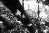 SHADOWS IN THE FOREST! (Ageeth van Geest) Tags: nature forest three tree shadow blackandwhite bw black white light scary