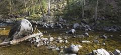 StillWatersRunDeep (tobias-eger) Tags: murg river landscape nature stones blackforest forest canon landschaft fluss natur steine