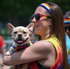 Boston Pride 2017 (traclyntol) Tags: boston pride parade 2017 lgtbaq gay queer massachusetts june rainbow colorful love dog