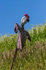 IMG_0579 (Ela&Piotr) Tags: bali indonesia indonezja jatiluwih ricefields