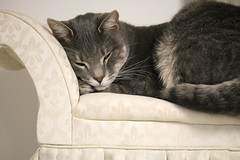Nym stole the doll couch (Damasquerade) Tags: cat cats cute couch tabby beautiful white chair miniature doll pet furniture