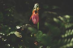 night light (taralees) Tags: june floraandfauna springonrabbitridge