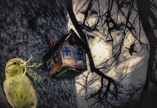 A Bird's House