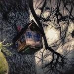 A Bird's House thumbnail