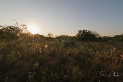 Early Morning on Ranch (Stephen J Pollard (Loud Music Lover of Nature)) Tags: sunrise amanecer salidadelsol