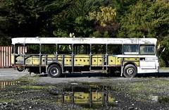 bus (stephen trinder) Tags: stephentrinder stephentrinderphotography christchurch christchurchnewzealand aotearoa kiwi landscape nz newzealand bus damaged old wrecked