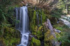 Along the Trail (writing with light 2422 (Not Pro)) Tags: waterfall washingtonstate tahomacreektrail mountrainiernationalpark richborder landscape sonya77 hikingtrail hiking