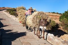 Donkey Transport (kate willmer) Tags: road street donkey cart hat hay sunshine light farmer amantani peru