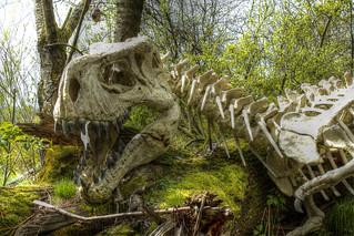 Drachenskelett - Dragon Skeleton