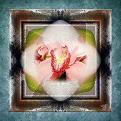 Orchid New (mfuata) Tags: orchid orkide woman kadın çiçek flower seçkin exclusive hayalci visionary simetri simmetry parlak bright