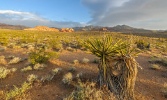 Red Rock Canyon, Nevada (Rick Knepper) Tags: nikond3x afsnikkor1424mmf28ged