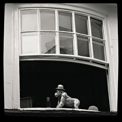 Only in York! (Squatbetty) Tags: monkey bowlerhat window york shambles