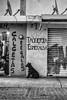 Tacos Esperanza (SeñorNT) Tags: shop local dog sith blackandwhite poor getto sanluispotosi prados cd2000 antenas sad graff street streetphoto