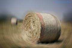 Rotoloni...rotolano!!! (Gianni Armano) Tags: rotoloni rotolano maggio fieno natura profumo foto gianni armano san giuliano nuovo alessandria piemonte italia photo flickr