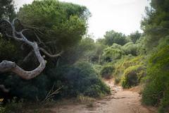 Wundervolles Mallorca (Pe Wi ...off on Holiday...Lago di Ledro/ Trentino ) Tags: wegzurbucht mallorca spain outdoor urlaub reise badebucht landschaft