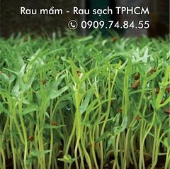 Giá bán rau mầm cửa hàng TPHCM (hoàngĐặng2) Tags: giá bán rau mầm cửa hàng tphcm