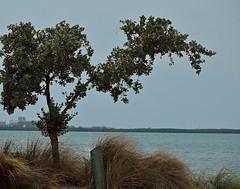 Dismal Day (ACEZandEIGHTZ) Tags: nikon d3200 biscaynebay seagrass