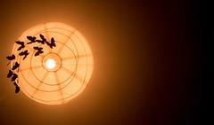 The lamp (Jenny Karakasheva) Tags: butterfly ceiling home goodnight dreamy loveit creative thelight light ricepaper night dreams orange indoor makemesmile decor handmade