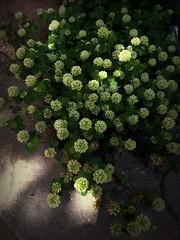flower - Цветочки (Anna Gelashvili) Tags: flower цветочки flowers soil почва ყვავილი ყვავილები macro растение ბალახი
