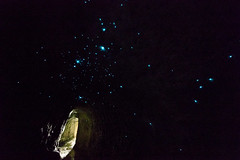 1B1A4379.jpg (Brendon & Keryn) Tags: zealandia newzealand northisland winter wellington glowworms