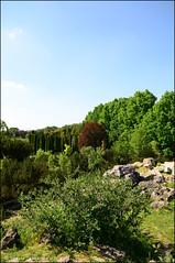 DSC_8846 (facebook.com/DorotaOstrowskaFoto) Tags: ogródbotaniczny kwiaty powsin warszawa