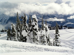 REVELSTOKE SNOWMOBING TRIP....AWESOME AND AMAZING!  (B.C.) (vermillion$baby) Tags: mountaintop bc done fun hosrstmans ice mountain revelstoke snow snowmobiling tree treestree white winter snowf revelstokef trees