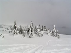 ALL THOSE TRACTS ARE OURS!  WHAT AN AWESOME DAY.  REVELSTOKE,  BC. (vermillion$baby) Tags: bc done hosrstmans ice mountain revelstoke snow snowmobiling tree treestree white winter snowf revelstokef trees