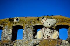 Ashley in Sweden (3 of 4) (GLEN A JOHNSON) Tags: brahehuscastle sweden ashley bear boyds boydsbear plush nikon d7100
