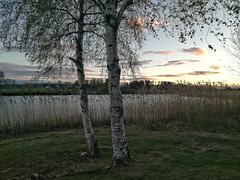 intermission (ΞSSΞ®®Ξ) Tags: ξssξ®®ξ huaweip9lite water lake 2017 hälsingland sweden sverige countryside tree snapseed outdoor evening landscape silhouettes