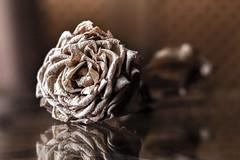 Vida seca (Julio_Sierra) Tags: flor seca 50mm 18 canon 700d julio sierra detalle macro reflejos nostalgica calidos tonos 35 macrofotografía