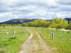 Auenlandschaft Hohenrode-April (15)