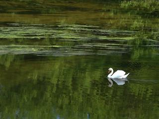 Réincarnation de Claude Monet