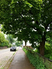 Walking (Ehsan 98) Tags: oslo norway evening walk tree green cloudy sky nature outdoors lovely weather day