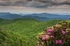 What a view!  Blue Ridge Parkway (Reid Northrup) Tags: landscape blueridgemountains blueridgeparkway rhododendron mountains graveyardfields flower flowers forest northcarolina hills trees clouds