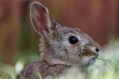 Baby Bunny (Kerstin Winters Photography) Tags: photography fotografie detail rabbit hase bunny animal macro closeup sigma nikon nikondsl nikondigital flickr flickrnature natur nature naturephotography naturfotografie