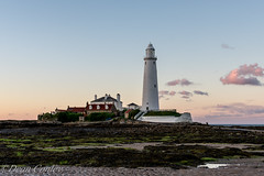 St. Mary's lighthouse, Whitley Bay. (dean conley) Tags: nikon nikond3400 35mm 35mmf18 lighthouse causeway stmaryslighthouse whitleybay rocks seaweed water sunset white cottages england northeast pinksky sea goldenhour prime primelens d3400 nikkor clouds pink sky sand green guide light blue lowtide low tide