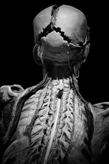 My Spine is the Bassline (Seeing Visions) Tags: 2017 unitedstates us california ca losangeles la expositionpark californiasciencecenter exhibitbodyworldspulse plastination humanremains gunthervonhagens male man skull flayed miscle tendons spine monochrome bw raymondfujioka