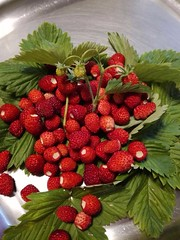 Fragoline di Bosco (Rossella Di Gioia) Tags: love christal prosecco afrodisiaco cocktail wuppertal estate fragolinedibosco fragole