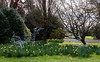 Lots More to Come Up Yet (Jocey K) Tags: southisland newzealand nikond750 christchurch monavale flowers daffodils gardens trees sky sculpture