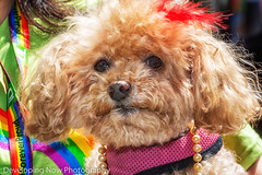 Pride Pooch (nywheels) Tags: dog pet animal colorful outdoors pride gaypride