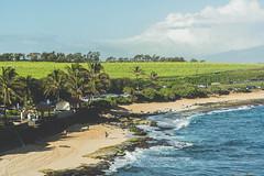 Close Coastline (Kou Thao) Tags: animals nature wildlife hawaii scenery photograhy kokohead adventure vintage vibes tropical airplane sky sunset clouds traveler luau horse jungle
